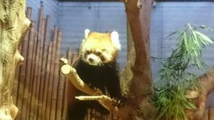 いしかわ動物園6.jpg