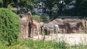 いしかわ動物園7.jpg