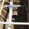 【広島県H市】管管継手VU400-HP450 『ラウンドプレスFF』