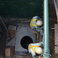 【新潟県N市】 FL支管 推進ヒューム管φ1500 × 塩ビ管φ500